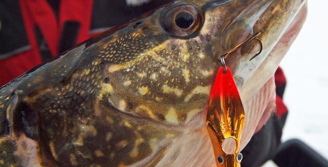 FISHING NEWS: Big Fish Bait
