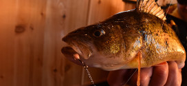 CUSTOM JIGS & SPINS: Ultimate One-Two Punch
