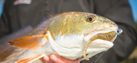 Z-Man: The Science and Art of Fishing